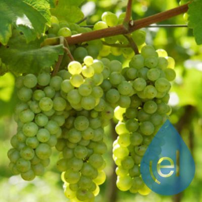 grapes-eliquid-concentrate